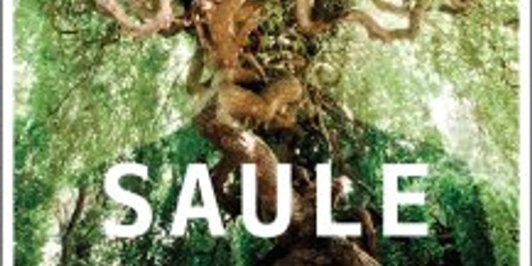 Saule + 1ère partie