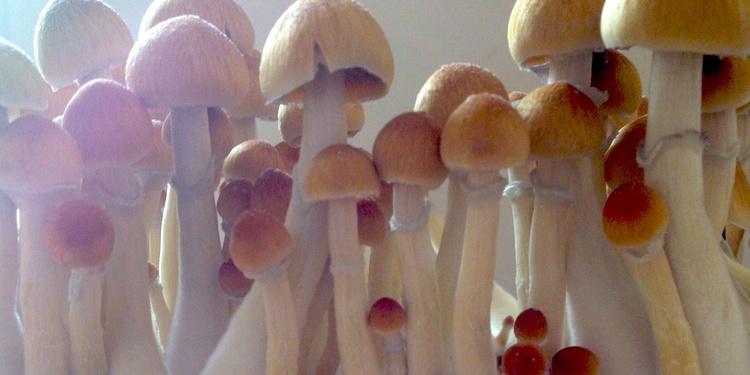 Murshroom Riot d'Elizabeth Saint-Jalmes et Cyril Leclerc