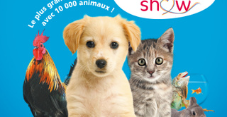Animal expo & Animalis show